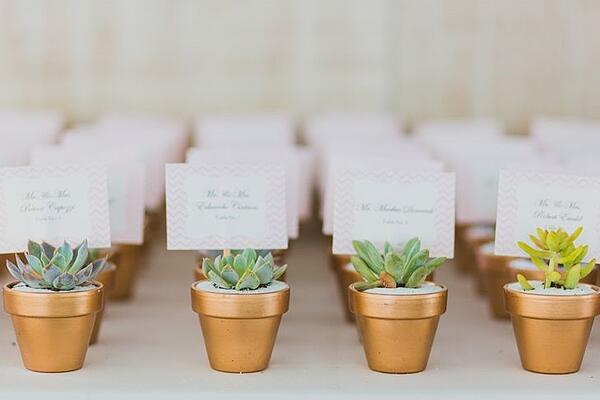 succulents wedding favors